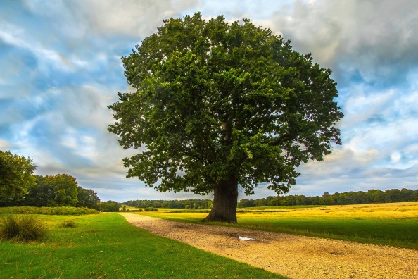 tree-954225_1920.jpg